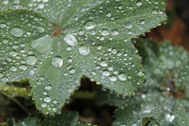 A leaf soaking in the rain
